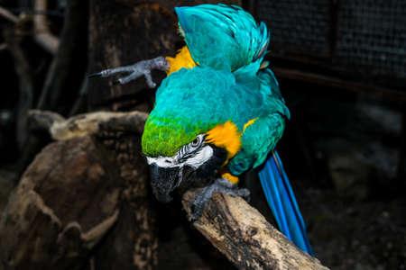 fascinate: Amazing Parrot
