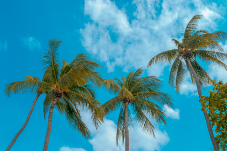 The background of coconut trees with blue sky and beach in the summer holiday season