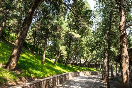 View of the iconic beautiful trees and walking paths through the green parks at the Summer Palace, a vast ensemble of lakes, gardens and palaces in Beijing, China.