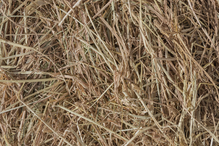 forage: Dries hay with cereals and other wild meadow herbs as a texture, good quality forage for cattle Stock Photo