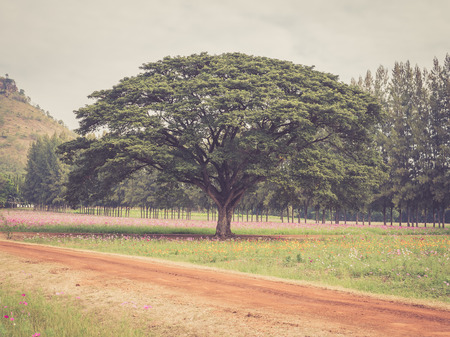 Alone tree in a flowered field with vintage filtered effect photo
