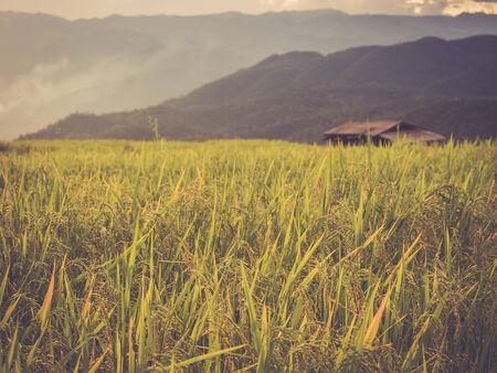 rice terrace: Rice terrace in Asia