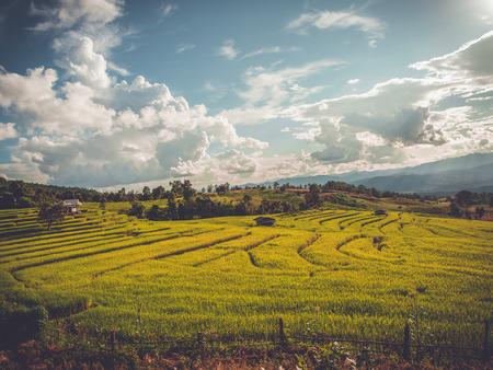 Rice terrace in Asia photo