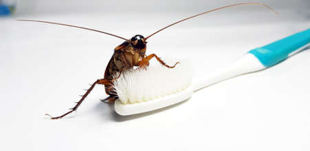 Cockroach on toothbrush and toothpaste isolated on white background. Contagion the disease, Plague,Healthy,Home concept.