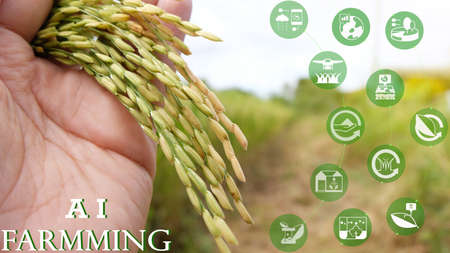 Smart farming,industrial agriculture concept with artificial intelligence(ai), Farmer use robot and augmented reality technology to research, collect,control ,monitor and management in the field.
