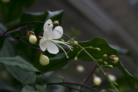 White flowers gracefully. Stock Photo