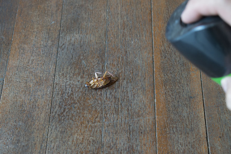 Cockroach injection dead