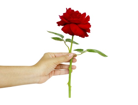 woman hand with red manicure holding red rose isolated on white background photo
