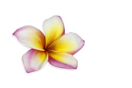 Frangipani flowers isolated on white Stock Photo