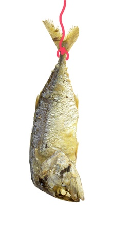 mackerel fried isolate on white background