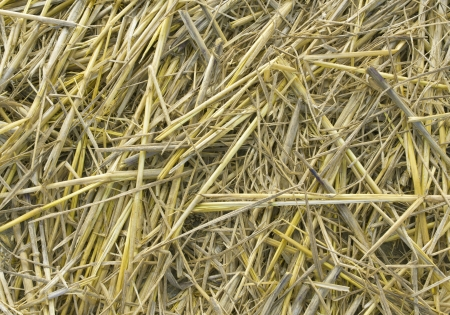Background, The natural texture of dry straw Stock Photo - 16852852