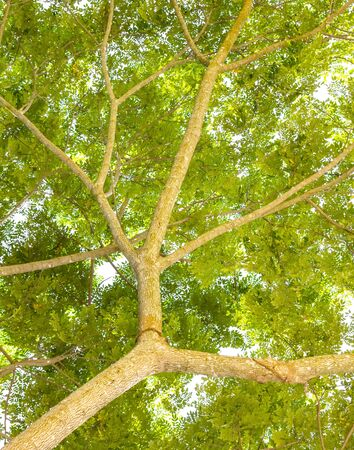 Pure fresh leaves of tree branch in the park  photo