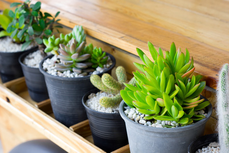 Cactus in a pot is placed in a wooden plank.
