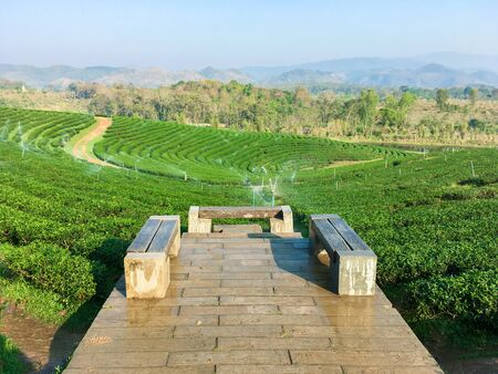 Green tea hill in the highlands in the morning. This tea plantation at Chiang Rai north Thailand.