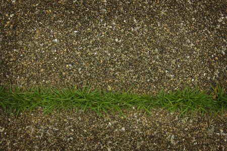 Green grass on the sandstone floor on walkway.