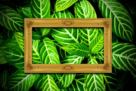 Gold wooden frame on green leaves texture background. Stock Photo