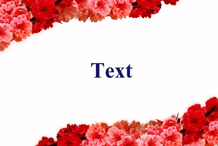 Red and Pink flowers frame  photo