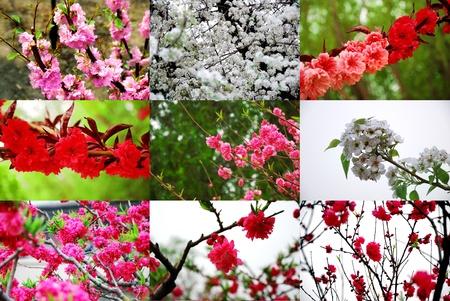 mix flower  photo