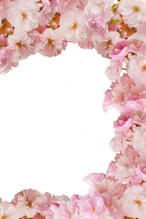 butterfly bow: Pink flowers frame