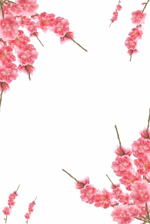 Summer background with frame and pink flowers  photo