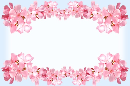 flower border: pink flower frame with copy space  Stock Photo