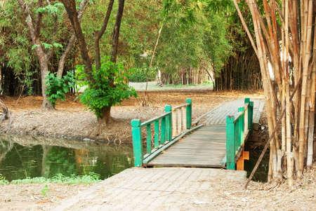 Bridge to the jungle Stock Photo - 12865621