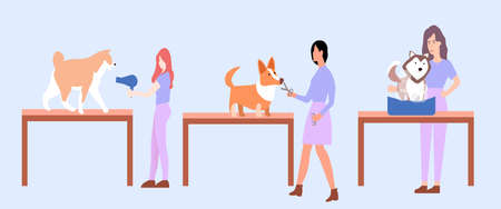 Washing dogs, haircut and drying dog, a vector graphics