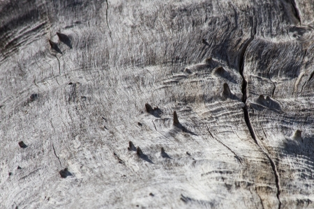 roughness: Dry tree trunk with knots and roughness Stock Photo