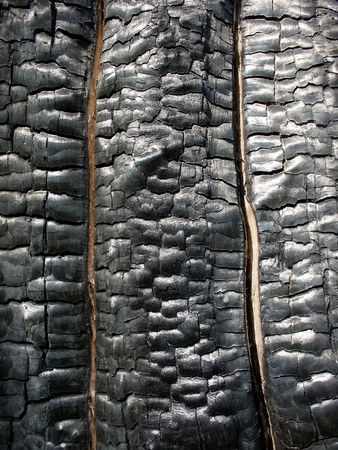onbepaalde: Hout verbrand en gebarsten boom voor achtergrond textuur of het contrast van licht en schaduw en in vieren Stockfoto