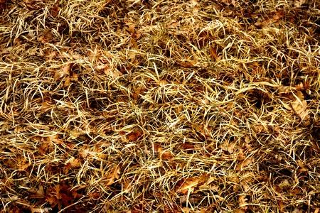 abstracto: Textura de hierbas  y hojas de roble secas caidas en el suelo   Texture of herbs and dried oak leaves fallen on the ground