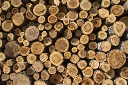sawn: Pile of logs aserradosPila poplar logs sawn poplar