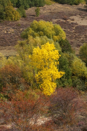 View of trees and bushes, with typical autumn colors  Mountain landscape with willows, birches, oaks and common dog-rose  Rosa canina  photo