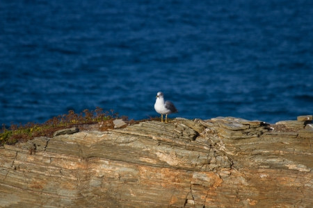 Seagull perched on the rocks of the shore blue sea photo