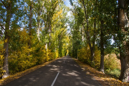 Nice secondary road tunnel formed by trees  In autumn, between sun and village in the background  photo