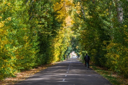poplar  banks: Nice secondary road cyclist tunnel formed by trees and autumn  With sun streaks