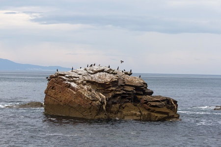 cormorants: Cormorant bird colony on an island of stone or rock in the Bay of Biscay  Atlantic sea  of Lugo  Galicia  Spain