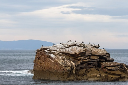 phalacrocoracidae: Cormorant bird colony on an island of stone or rock in the Bay of Biscay  Atlantic sea  of Lugo  Galicia  Spain