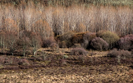 poplars: Winter landscape with trees, shrubs and bushes in forest of oaks and poplars    Stock Photo