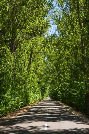 hojas: Nice secondary road with arch formed by trees   Leisure  travel in spring, between the sun and shade  Leon  Spain  Stock Photo