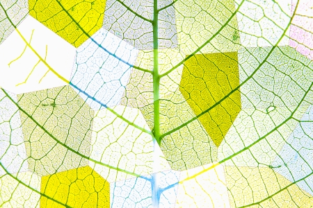 Puzzle with polygons illustrated in color and motif vegetable leaf nerves
