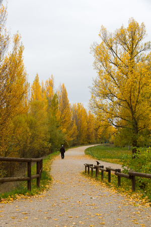 Route, road or pedestrian mall in park with autumn trees and people walking  photo