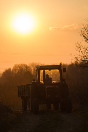 tractor trailer: Tractor-trailer approaching from a dirt road to sunset  Stock Photo