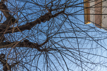 building sector: Winter tree branches intertwined and tangled on of blue sky and building sector