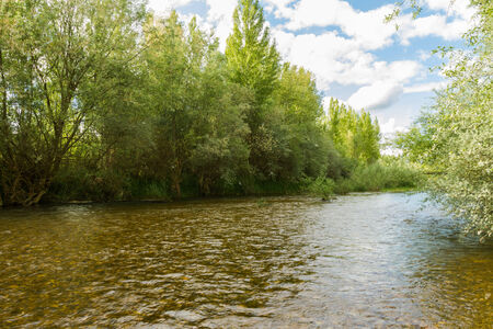 poplars: River with willows and poplars on either side in spring and pollen rain   Torio River   Leon   Spain  Stock Photo