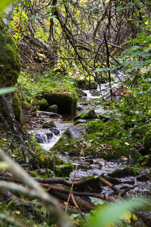 caudal: Stream in the autumn forest with dense water running among stones