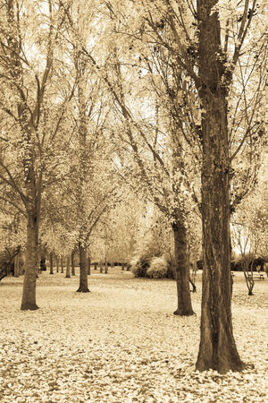 Autumn Landscape with fallen leaves photographically processed in sepia tone unreal, surreal or fantastic aspect
