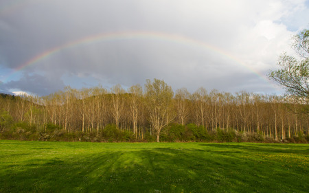 poplars: Meadow landscape with poplar trees and rainbow in the sky at sunset  After a spring storm