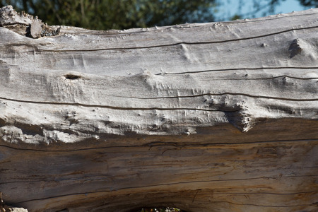 roughness: Dry tree trunk with cracks, knots and roughness  Stock Photo