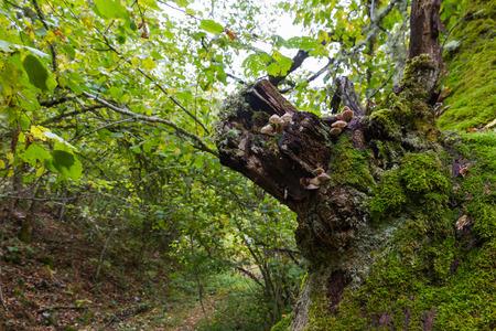 bark rain tree: Mushrooms, moss and lichen on tree trunk in autumn