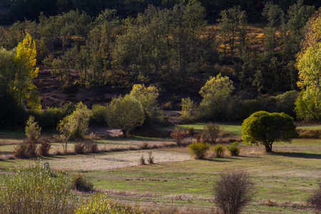 Landscape with grass pastures, groves and oak forest in autumn  photo